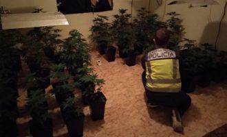Detinguts tres joves a Gandia per cultivar i vendre marihuana