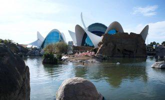L'Oceanogràfic de València, una experiència única en l'aquari més gran d'Europa