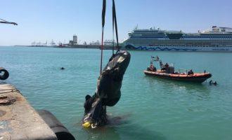 Un ferri choca con un cachalote y arrastra sus restos hasta la dársena del puerto