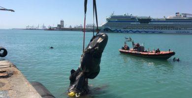 Un ferri xoca amb un catxalot i arrossega les seues restes fins a la dàrsena del port