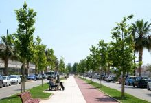 El Ayuntamiento ha ampliado el arbolado en Paiporta con más de 300 unidades
