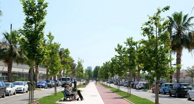 L'Ajuntament ha ampliat l'arbrat a Paiporta amb més de 300 unitats