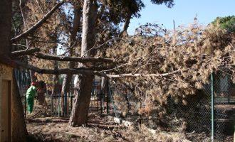 Es retiren els pins caiguts sobre el col·legi Cumbres de Campolivar