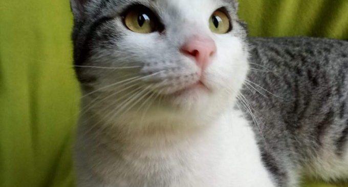 Benestar Animal de Burjassot alerta sobre la quantitat de gats trobats al carrer