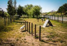 Els barris de Sant Llorenç i Benimaclet disposaran d'una tercera àrea de socialització canina