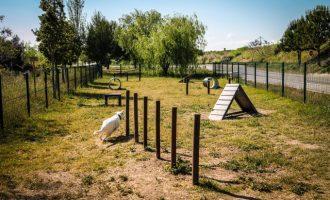 S'obri al públic el primer circuit agility caní a Sueca