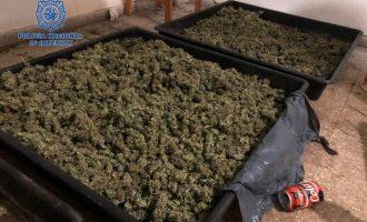 Desmantellats dos laboratoris per a cultivar marihuana a Torrent