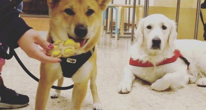 Los bares dogfriendly de València: todo para tu mascota