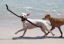 Compromís reclama la baixada de l'IVA per als serveis veterinaris