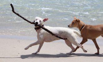 La desfilada solidària per a adoptar gossos serà al desembre