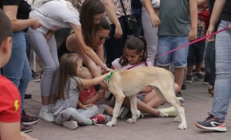 Alaquàs celebra la VII Feria Amigos de los Animales