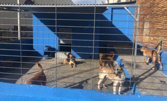 Paterna construirà un refugi municipal per a més de centenar d'animals