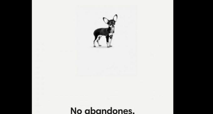 """València estrena campanya animalista d'estiu: """"No abandones. Qui perd un amic, perd un tresor"""""""