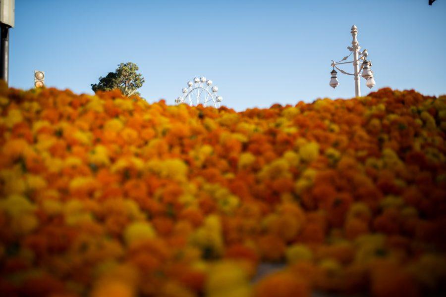 Batalla de Flors 2019-3