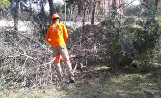 L'Ajuntament reforça la neteja de les franges forestals de prevenció d'incendis