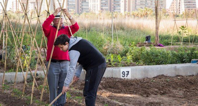 """Mislata penja el cartell de """"complet"""" en els seus horts urbans"""