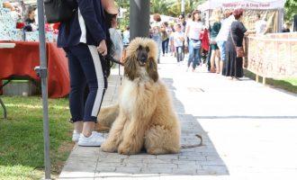 Paterna inicia la implantació de l'ADN caní per a combatre les caques de gos