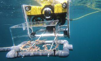 La Fundació Oceanogràfic solta taurons a Cartagena amb l'ajuda d'un robot submarí