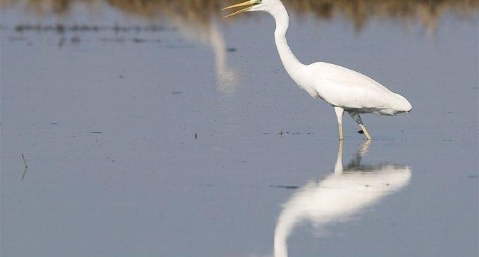 Turisme promociona la Comunitat Valenciana como destino de turismo ornitológico en Falsterbo Bird Show de Suecia
