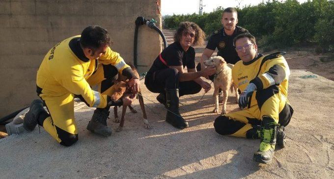 Bombers rescaten a dos gossos d'una bassa de reg a Museros