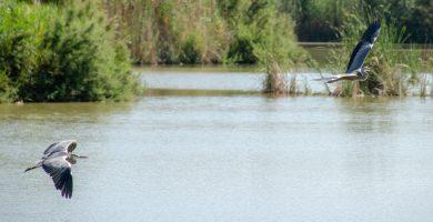 La recuperación de la Albufera significa valor ambiental, pero también turístico