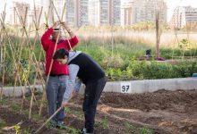 Les més de 100 parcel·les ocupades de l'hort urbà de Mislata incentiven l'ecologisme i l'autoconsum en el municipi