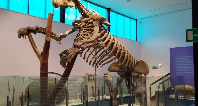 L'Ajuntament restaura peces principals del Museu de Ciències Naturals de Vivers