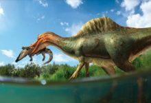 Describen la primera especie de dinosaurio espinosaurio en la Península Ibérica procedente de Vallibona (Castellón)