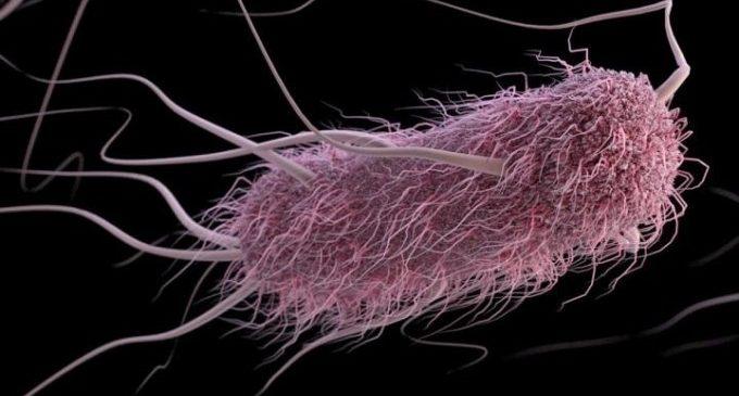 Nous biosensors permeten detectar de forma més ràpida i precisa la presència d'E. coli en productes carnis