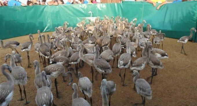 L'Oceanogràfic col·labora amb la Junta d'Andalusia en la recuperació de flamencs i animals malalts