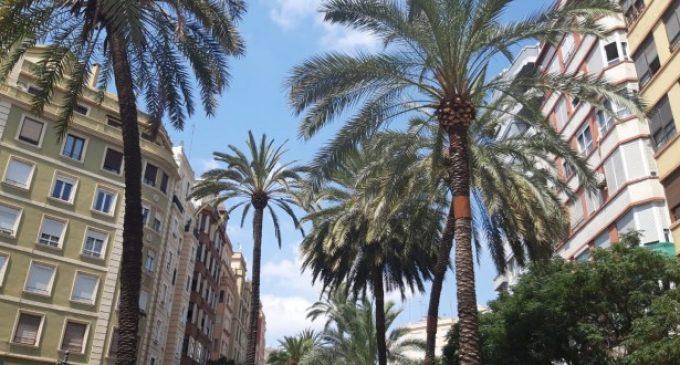 Continua la poda de palmeres de l'avinguda Regne de València