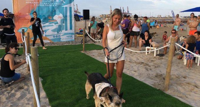 """Uns 50 gossos 'especials' participen en un concurs solidari i """"diferent"""" en benefici de SVPAP"""