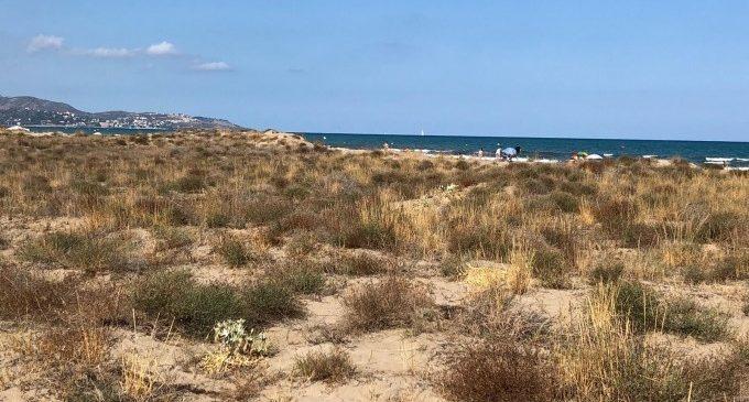 La platja del Serradal, declarada microreserva de flora per a protegir l'únic sistema dunar de Castelló