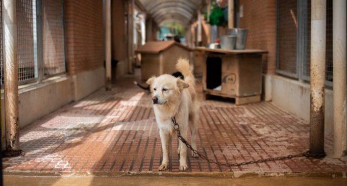 El sacrifici zero, a l'espera de l'aprovació de la nova Llei de Benestar Animal