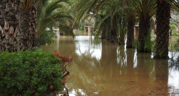 La palmera més alta del parc municipal d'Elx, amb 25 metres i més de 200 anys, cau a causa del temporal