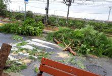 Paterna revisa l'estat dels arbres després del temporal de pluges