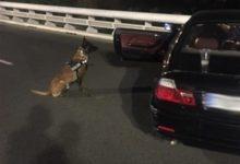 Detenido un hombre tras agredir a un perro de la Unidad Canina de Policía de València