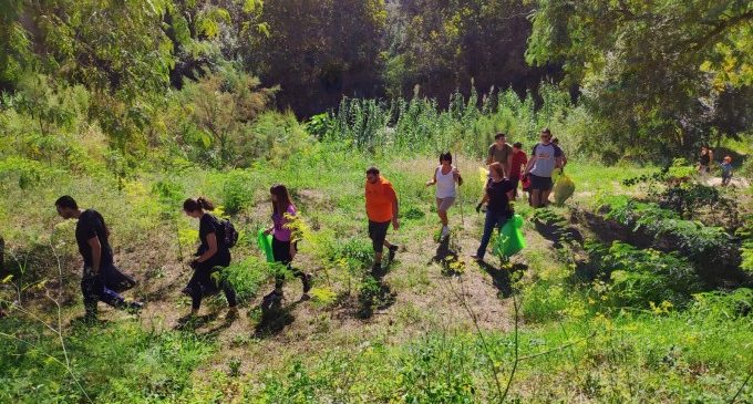 Alzira participa en la campaña de limpieza del río