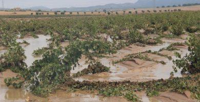 El Consell aprova el pagament de les ajudes urgents a danys agraris per la DANA