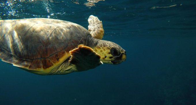El cambio climático subirá un metro el nivel del mar Mediterráneo en 2100