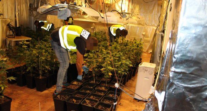 Desmantellen més de 600 plantes de marihuana en un garatge de Torrent