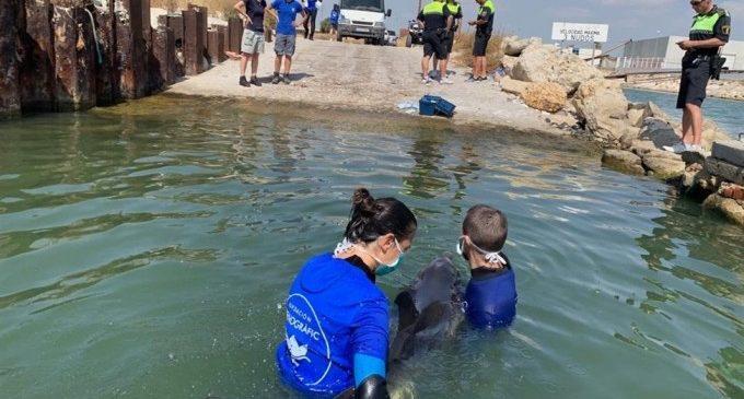 L'Oceanogràfic confirma que el nou cep del virus més letal per a cetacis circula per tot el Mediterrani