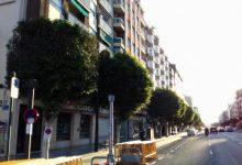 Arranca la poda de los 356 árboles de la avenida del Puerto