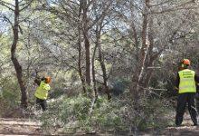 """El PPCV adverteix d'un """"greu risc"""" d'incendis en les muntanyes valencianes per """"la falta de gestió forestal"""""""