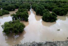 El PP demana assegurar les indemnitzacions als agricultors de la Vega Baixa