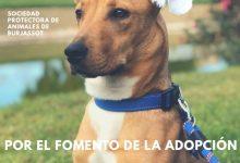 SPAB organitza un rastre solidari per als animals abandonats