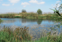 """La qualitat de l'aigua de l'Albufera és """"probablement la millor de tot l'any"""""""