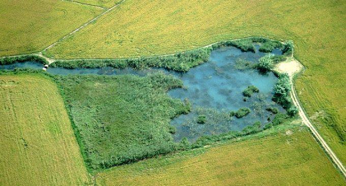 Los Ullals: 'islas' de biodiversidad en la Albufera