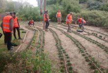 El Ayuntamiento oferta cursos de jardinería, arte floral y medio ambiente