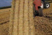 El Consell Agrari Municipal comença la recollida de palla d'arròs
